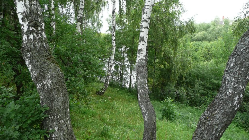 Озеро в Богданихе