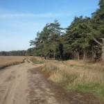Лес и поле у Токарево