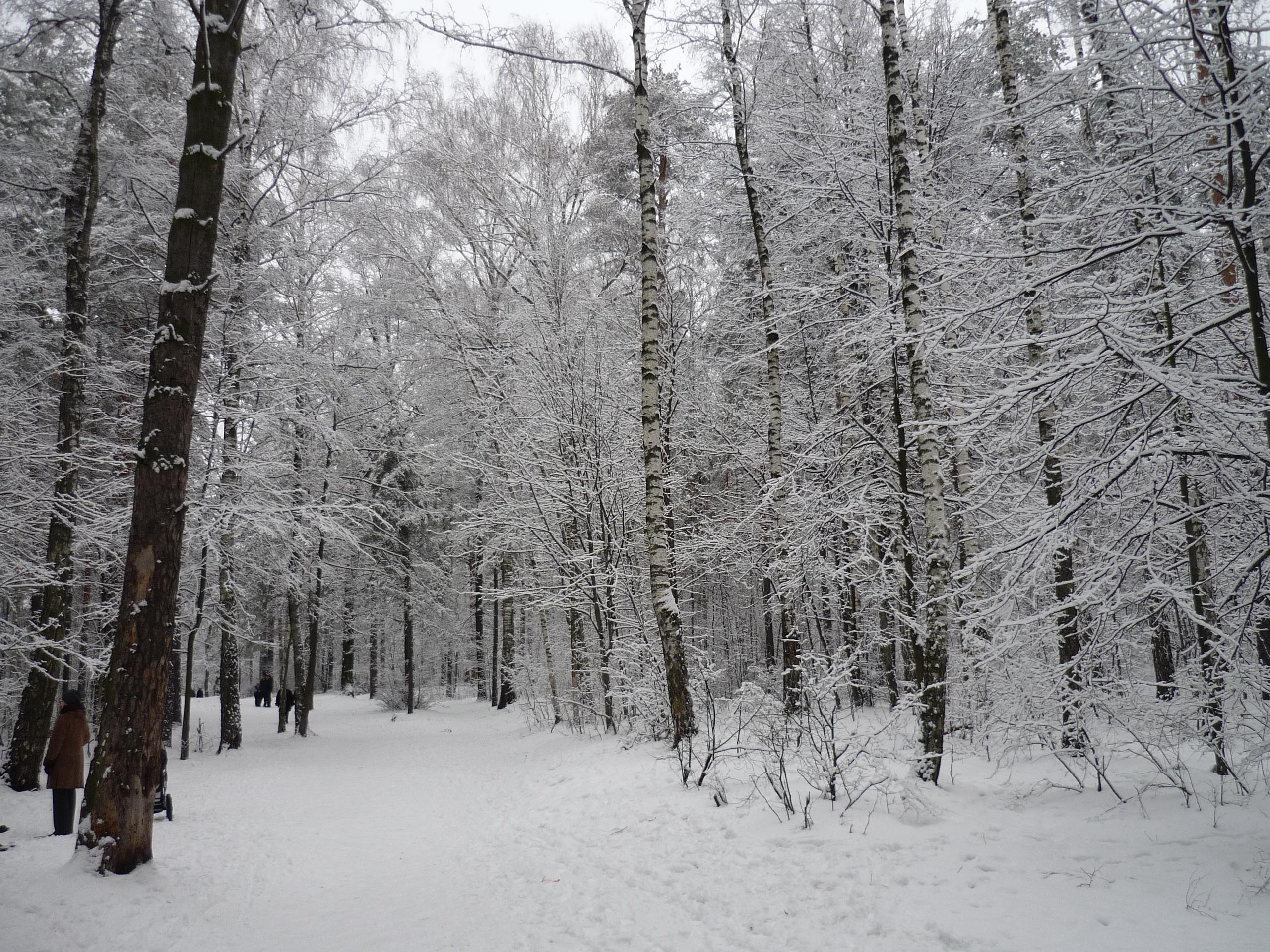 В лесу Лыткарино 01-01-2012