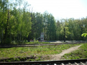 Из леса на дорогу в Токарево