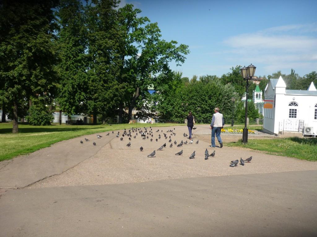 Голуби в Николо-Угрешском монастыре