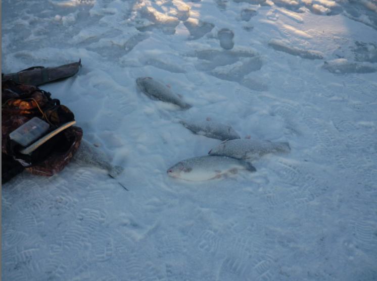 Ловля рыбы по-македонски . Пруд Гарантия - результат