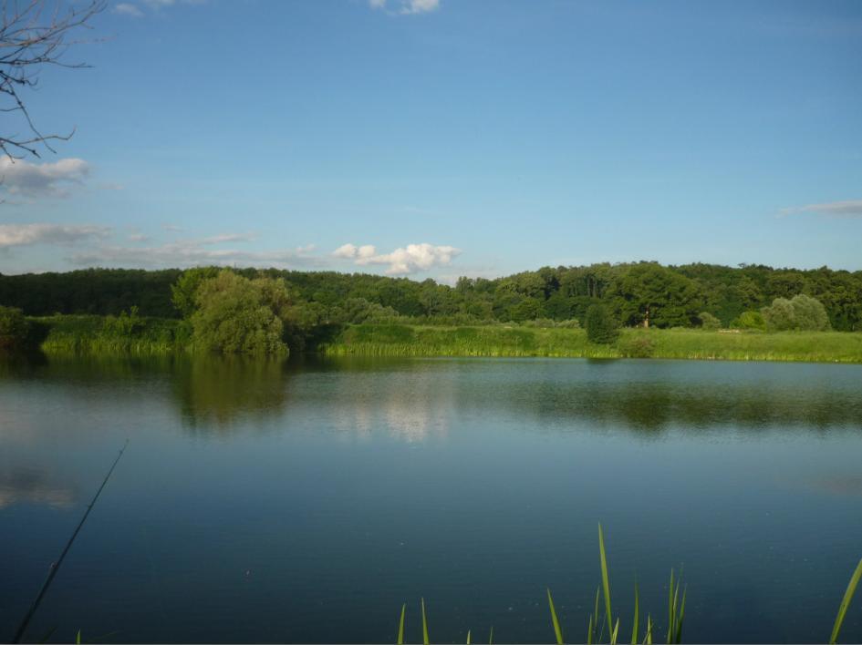 Озеро Круглое. Вид на лес. Рыбалка в Подмосковье