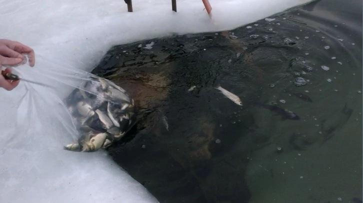 Новое поколение рыбы в Лыткаринском карьере