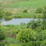 Торфянка в Лыткарино