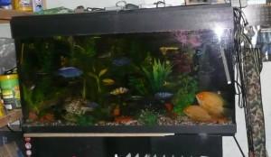 Магазин на рынке - аквариум у Константина