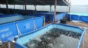 База проверки рыбы